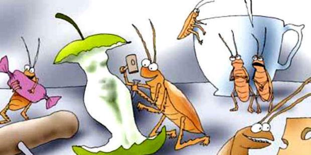 тараканы на столе картинка