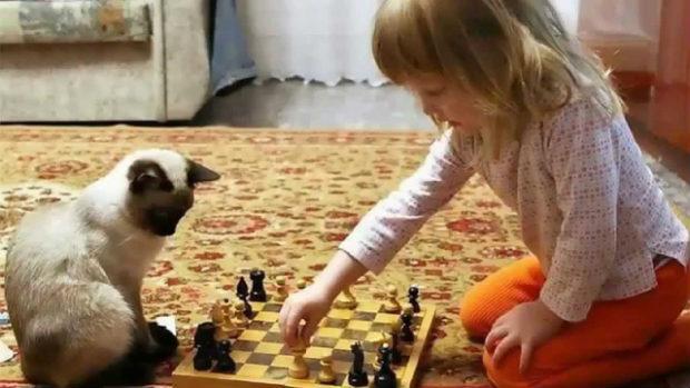дети животные и клопы
