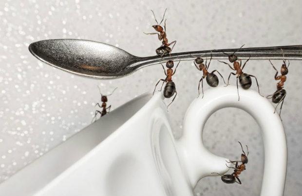 Выведение муравьёв Москва и Подмосковье
