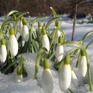 клещи 2017 весна почему опасны