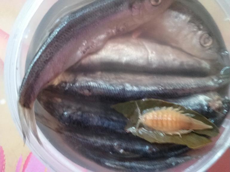 Морской таракан в банке сельди