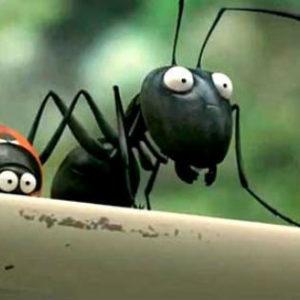 Средства от домашних муравьев